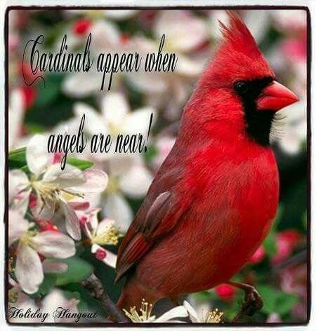 When Cardinals Appearangels Are Near Runtrimom